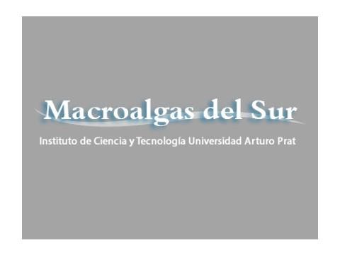 Macro Algas del Sur - WDesign - Diseño Web Osorno